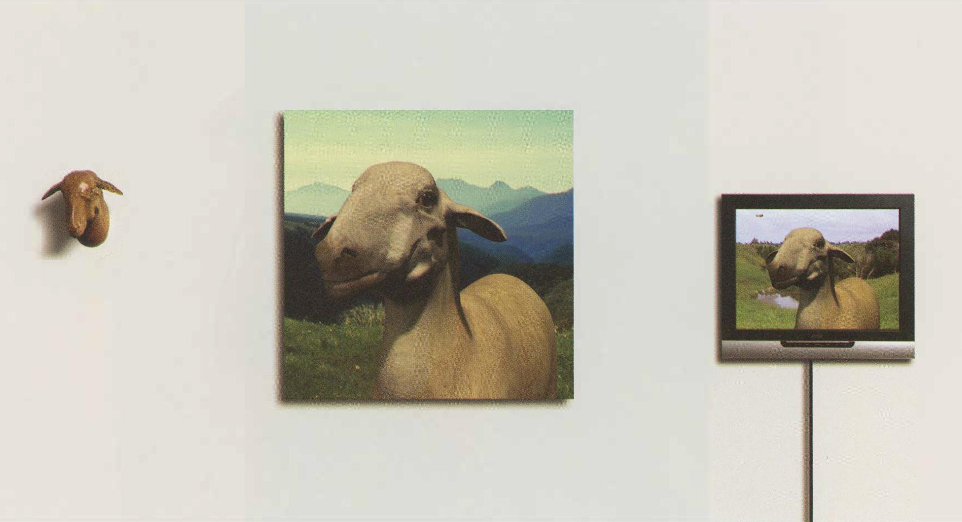 ©, Brit Bunkley, Sheep Jet Head