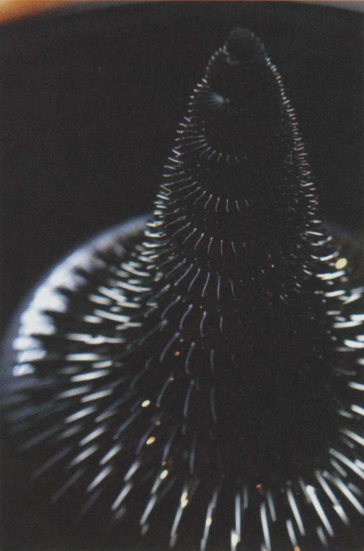 ©, Sachiko Kodama, Morpho Tower/Spiral Swirl