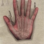 Observational Drawings - Hand