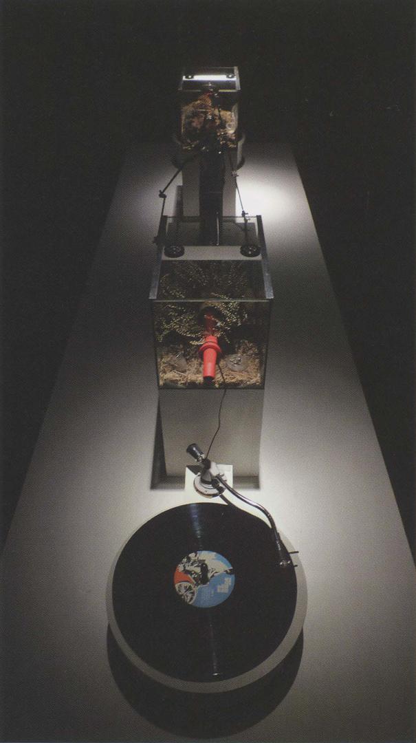 ©2011, Kuai Shen Auson, Oh!m1gas: biomieticstridulationenvironment