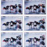 Ten Cows