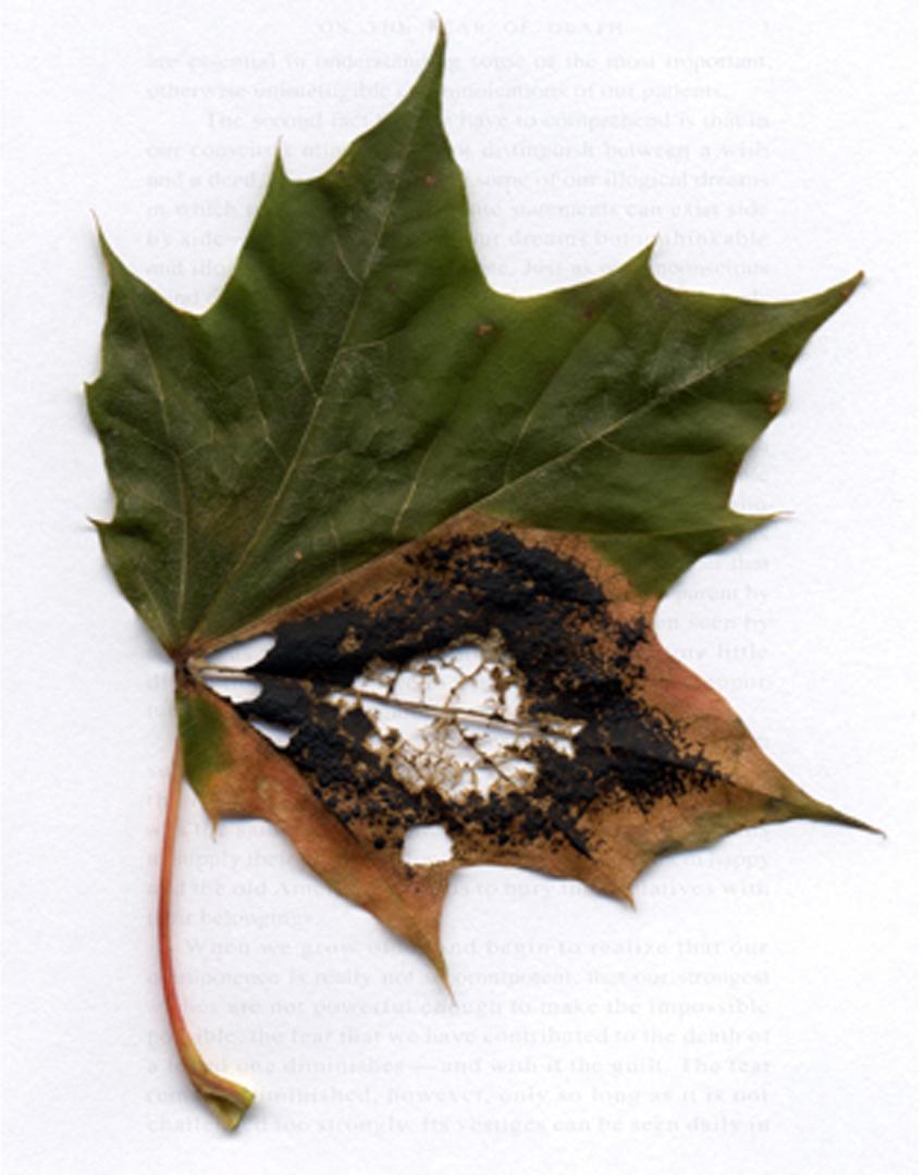 ©2009, Liz Lee, A New Leaf – Guilt