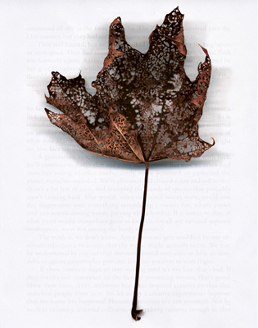 ©2009, Liz Lee, A New Leaf Series – Hope