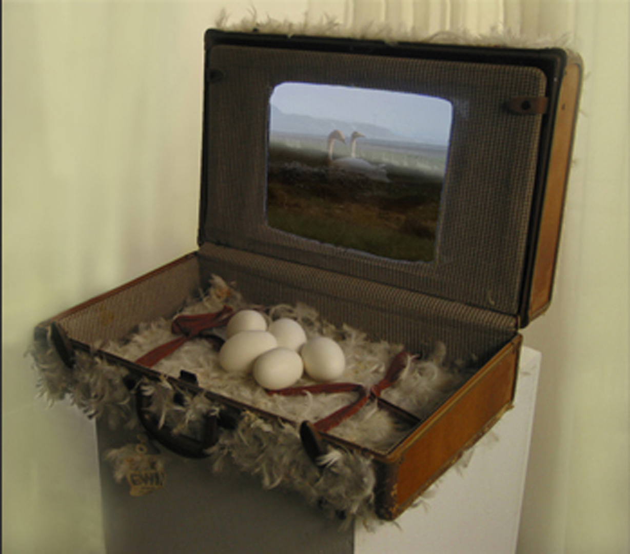 ©2011, Tina Aufiero, Swan in a suitcase