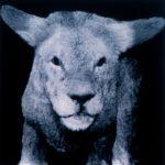 Lion/Lamb