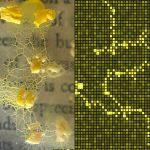 An Integrated Bhiobrid Reality: Degenerative Cultures