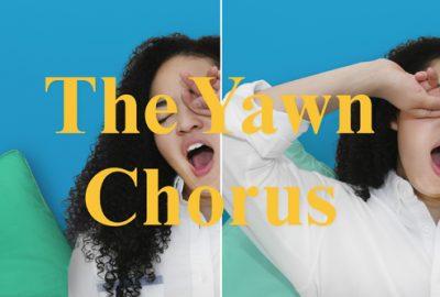 2019 Rothera Thompson Baker Kwan The Yawn Chorus